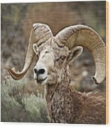 The Bighorn Wood Print