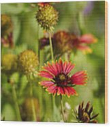 The Colors Of Summer  Wood Print