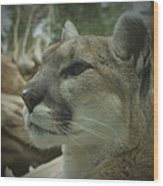 The Cougar 3 Wood Print by Ernie Echols