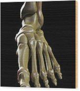 The Foot Bones Wood Print
