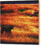 The Golden Grain Of A Sunset Dream Wood Print