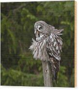 The Great Grey Owl Wood Print