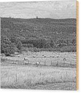 The Hay Field Wood Print