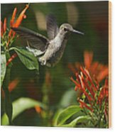 The Hummingbird Hover  Wood Print