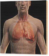 The Respiratory And Cardiovascular Wood Print