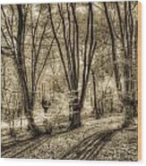 The Spring Forest Wood Print