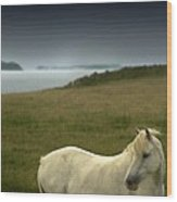 The Welsh Pony  Wood Print