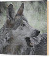 The Wolf 4 Wood Print