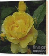 Yellow  Rose Of Summer Wood Print