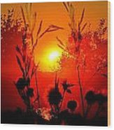 Thistles In The Sunset Wood Print