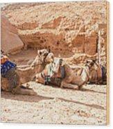 Three Camels Wood Print
