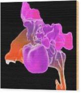 Throat And Paranasal Sinuses Wood Print
