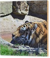 Tiger Playing Wood Print