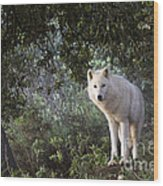 Timber Wolf Wood Print by Angel  Tarantella