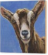 Toggenburg Goat On Blue Wood Print