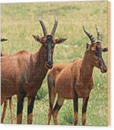 Topi Antelope Wood Print