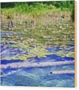 Torch River Water Lilies Wood Print