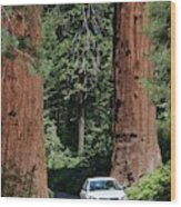 Tourism In Sequoia National Park Wood Print