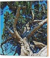 Tree Climbing Paradise Wood Print