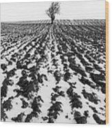 Tree In Snow Wood Print by John Farnan