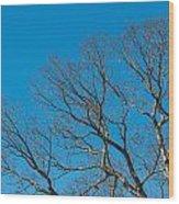 Tree Profile Wood Print