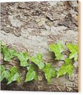 Tree Vine Wood Print