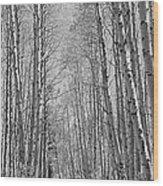 Trees Along A Road, Log Cabin Gold Wood Print