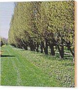 Trees Along A Walkway In A Botanical Wood Print