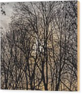 Trees And Late Afternoon Light Wood Print