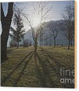 Trees In Backlit Wood Print