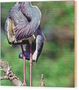 Tricolored Heron In Breeding Plumage Wood Print