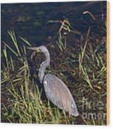 Tricolored Heron Wood Print