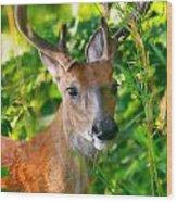 Trophy Buck In Velvet Wood Print