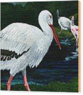 Tropical Birds Wood Print