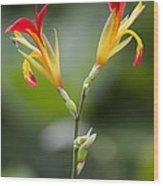 Tropical Flower 6 Wood Print