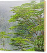 Tropical Forest, Seychelles Wood Print