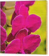 Tropical Orchid Flower Blossoms Wood Print