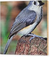 Tufted Titmouse Parus Bicolor Wood Print