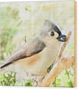 Tufted Titmouse With Seed - Digital Paint Wood Print
