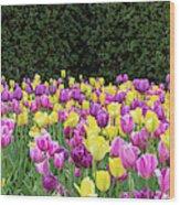 Tulip Flowers In A Garden, Chicago Wood Print