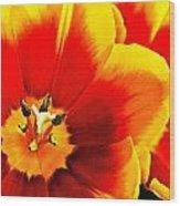 Tulip Intimacy Wood Print