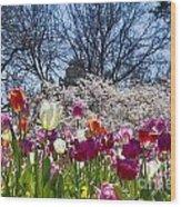 Tulips At Dallas Arboretum V94 Wood Print