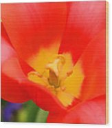 Tulips At Thanksgiving Point - 28 Wood Print
