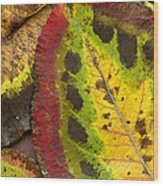 Turning Leaves Wood Print