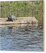 Turtle Float Wood Print