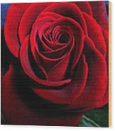 Twilight Rose  Wood Print by Etti PALITZ