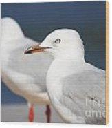 Two Boardwalk Gulls Wood Print