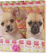 Two Chihuahuas Wood Print by Greg Cuddiford