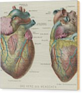 Two Views Of The Heart, With  The Parts Wood Print