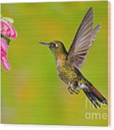 Tyrian Metaltail Hummingbird Wood Print